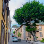 Драконовое дерево в Икод де Лос Винос на Тенерифе
