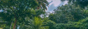 второй ботанический сад испании в Ла Оротаве