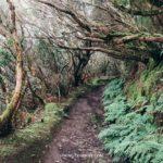 19 прекрасных маршрутов Тенерифе