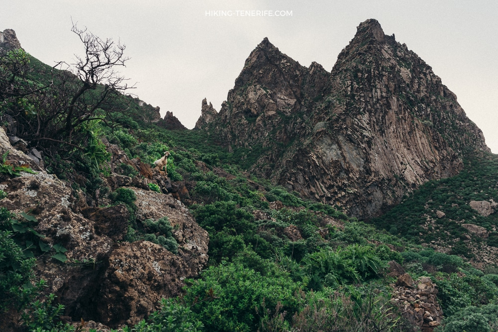 dsc 7835 - Таборно - океан и горы. Поход по сердцу Анаги