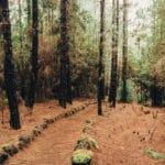 Поиск грибов в Las Lagunetas