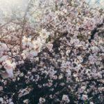 6 пешеходных маршрутов для весны