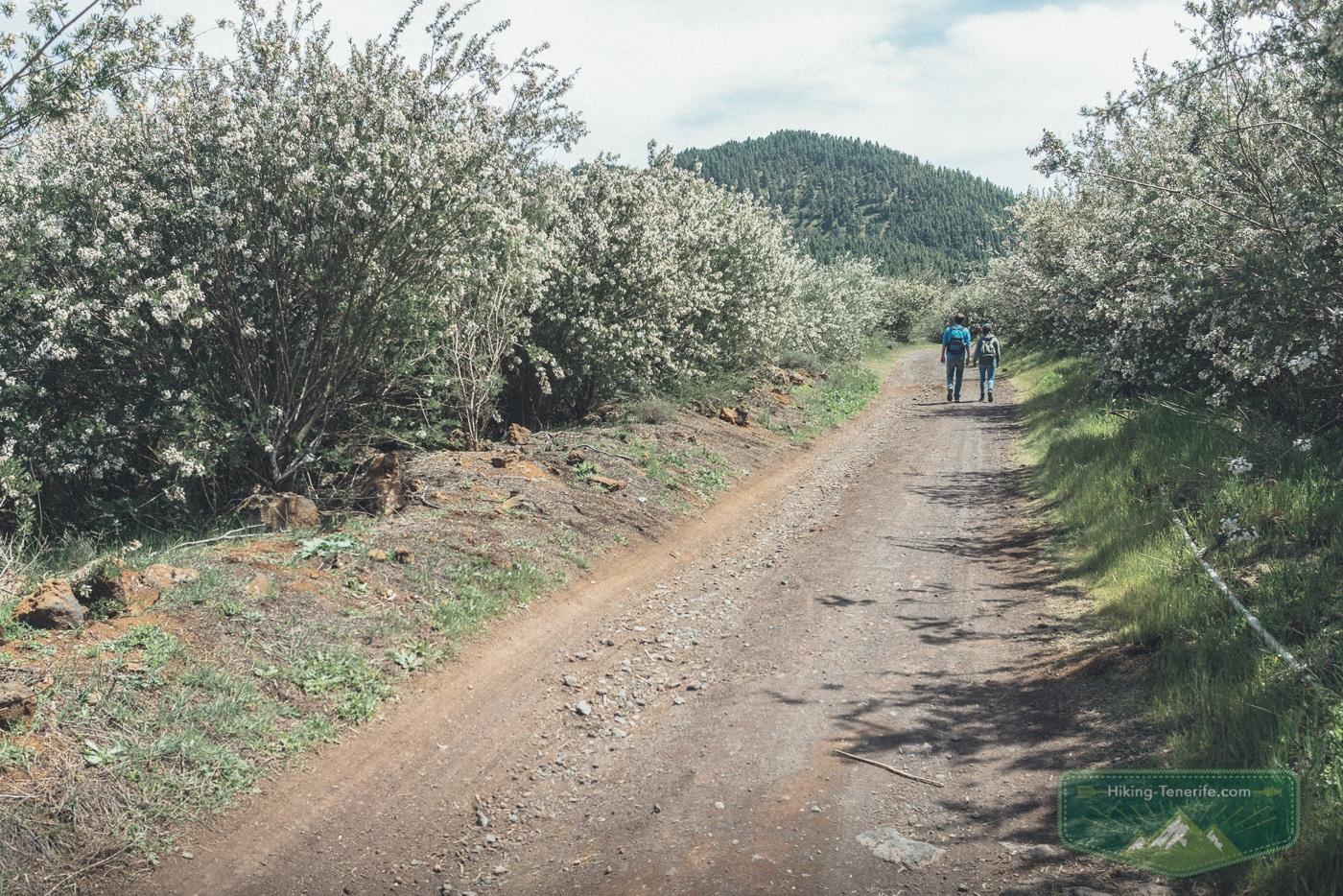 поход по тенерифе весной
