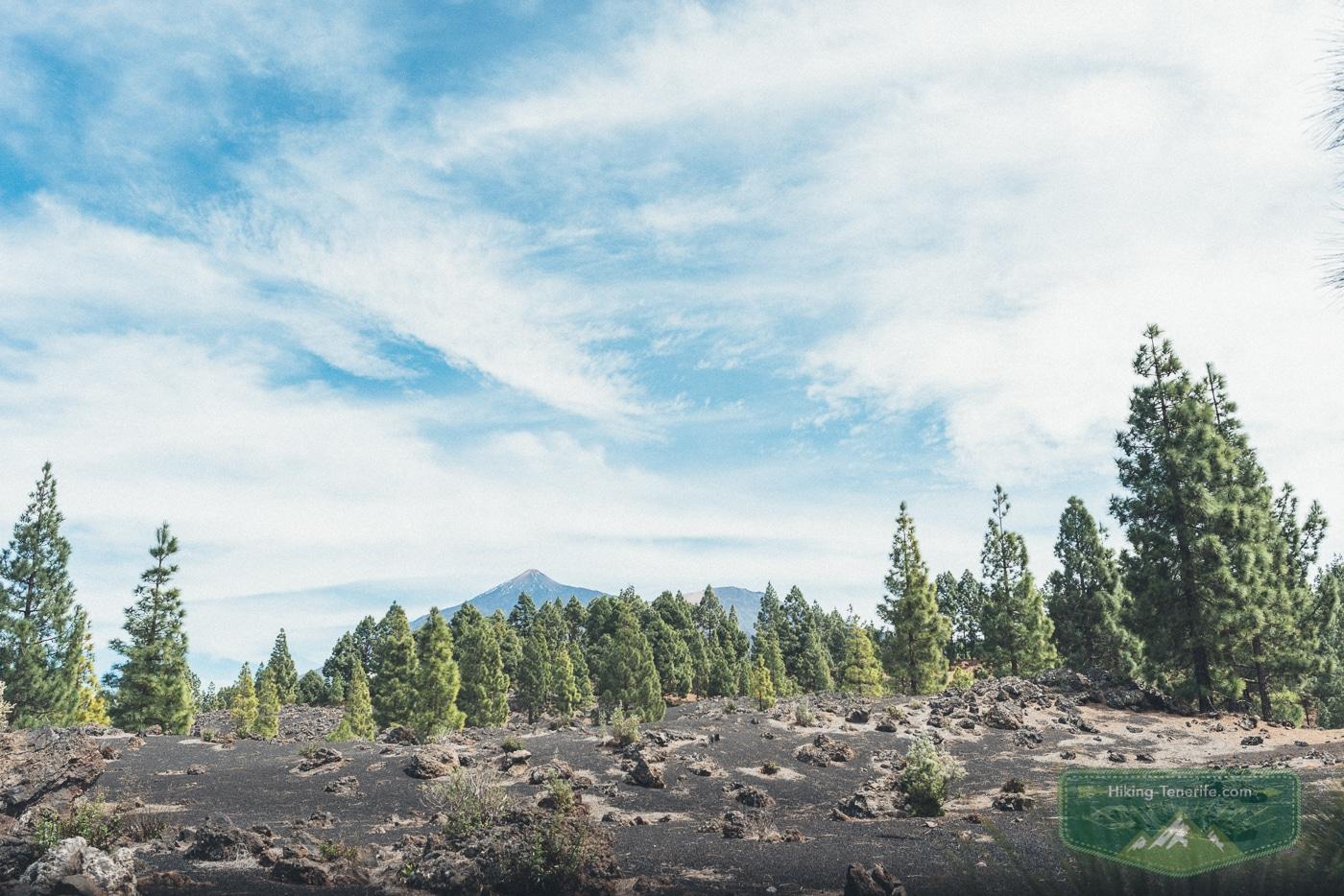 вулкан тейде и сосны Эрхоса
