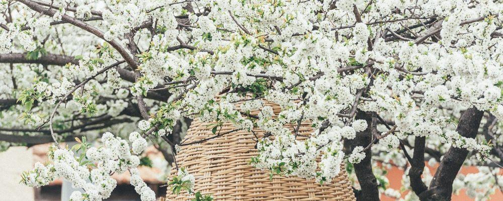 весна не Тенерифе