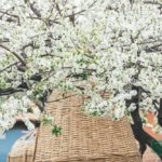 Отдых на Тенерифе в мае