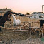 Casa Caballo c красивыми лошадьми рядом с Эль Медано