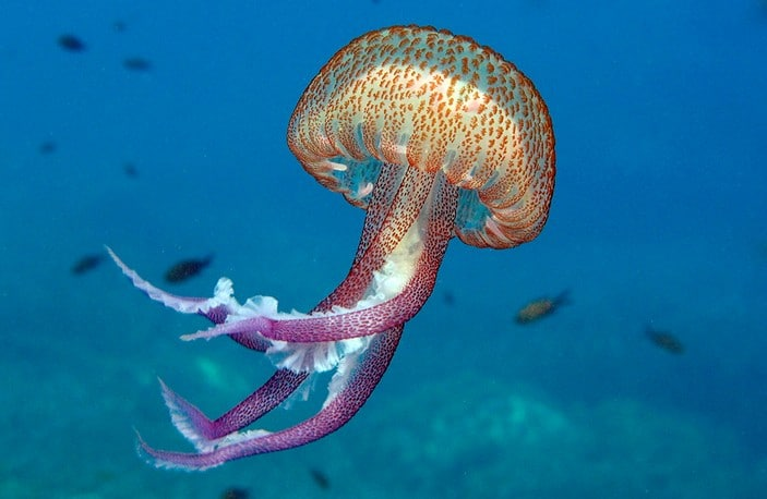 Опасности Тенерифе: медузы, змеи, комары, акулы?