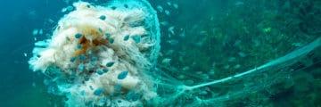 медузы Тенерифе