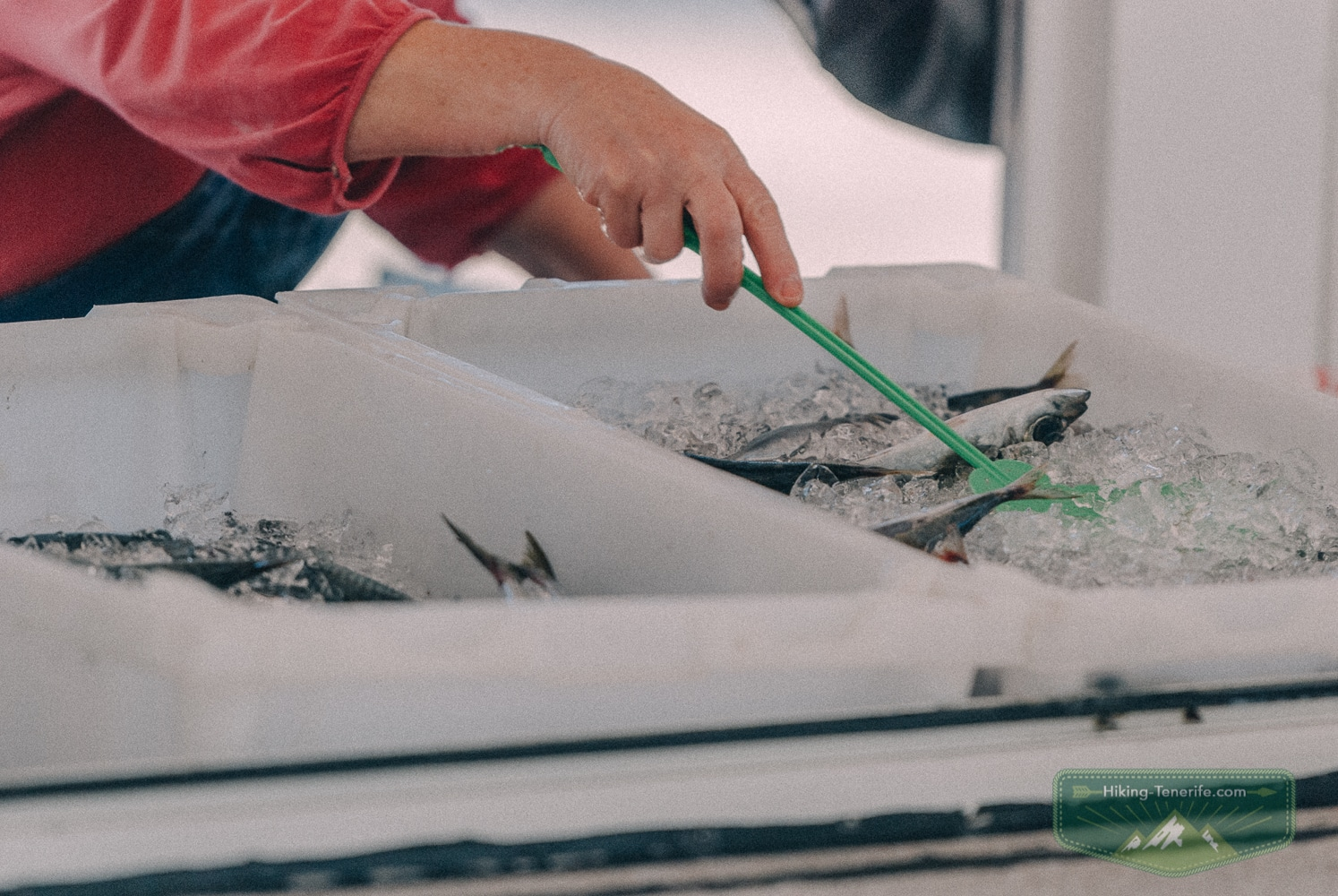 морепродукты Тенерифе