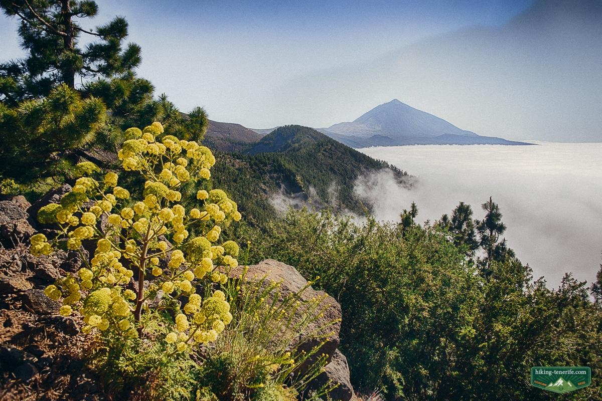 вулкан Тейде Канарские острова