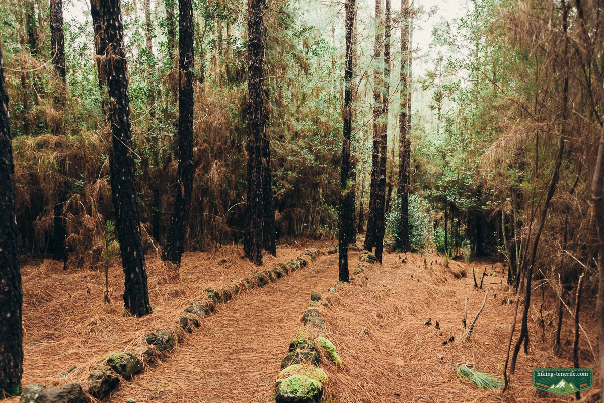грибной лес в Эсперансе