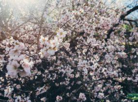 весна на Тенерифе