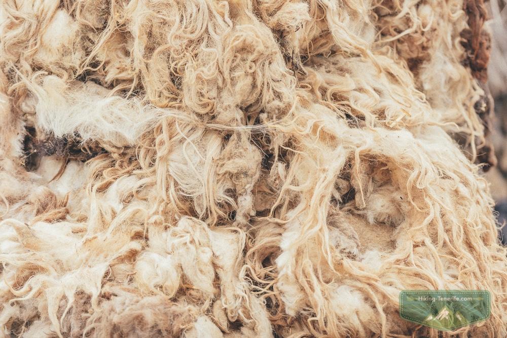 шерсть козы и овцы Тенерифе